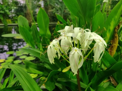 plantentuin-serre