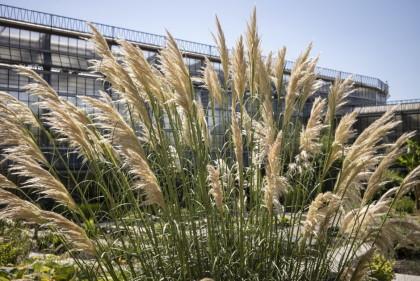 buitentuin-plantentuin-gras