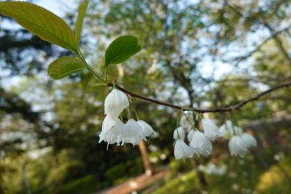 plantentuin-rondleiding-lentegebeuren-1