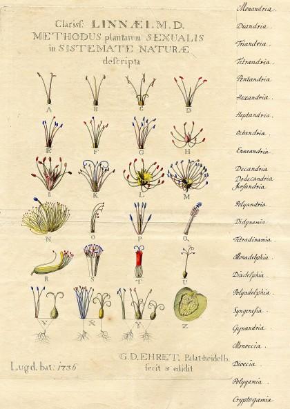 plantentuin-themarondleiding-voortschrijdendinzicht